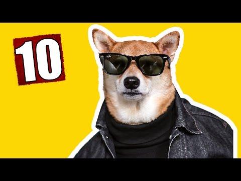 видео: 10 КРУТЫХ ВЕЩЕЙ ДЛЯ СОБАК С АЛИЭКСПРЕСС. Товары для собаки.