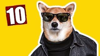 10 КРУТЫХ ВЕЩЕЙ ДЛЯ СОБАК С АЛИЭКСПРЕСС. Товары для собаки.(, 2016-10-18T15:32:57.000Z)