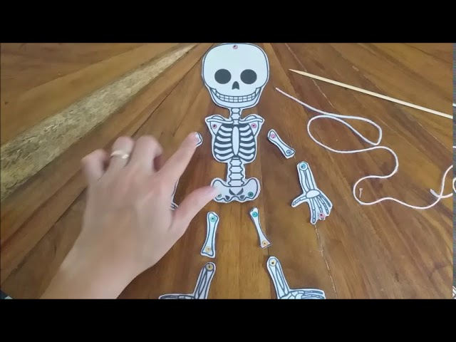 Sistema óseo Marioneta Del Esqueleto Por Yésica Cambronero Arguedas Youtube