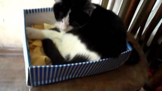 Нюше нравится спать в коробке