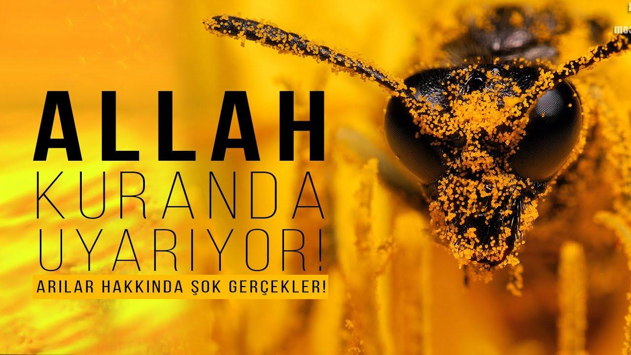 Download ALLAH Kuran'daki Ayet İle İnsanları Uyarıyor! Arılar Yok olursa Neler olur! Kıyamet alametleri.