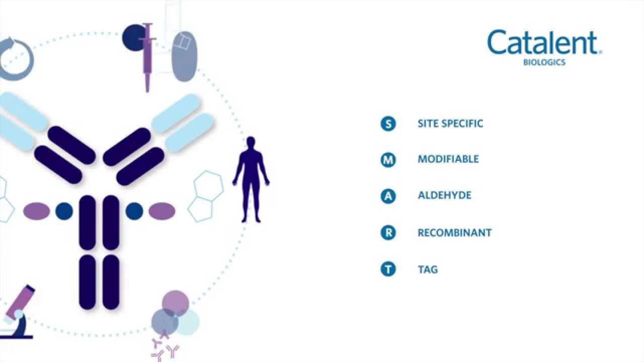 Antibody Drug Conjugates BOC Sciences - YouTube