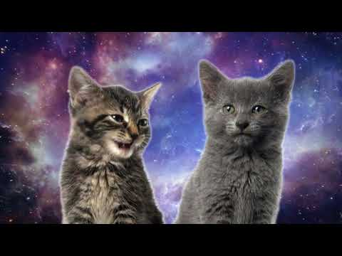 TECHNO CHICKEN Space Cats Magic Fly dog song chicken song  baby dance, baby song  deer song, chicken