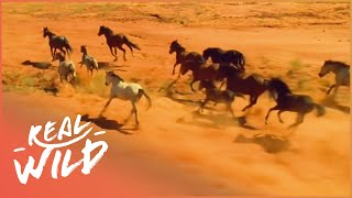 The Life Of Wild Horses | Horse: In The Wild | Real Wild