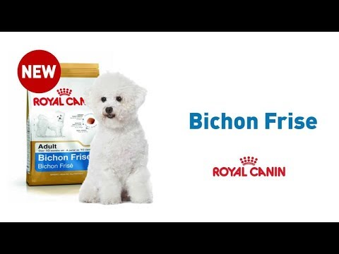 The Bichon Frise | Royal Canin Breed Health Nutrition