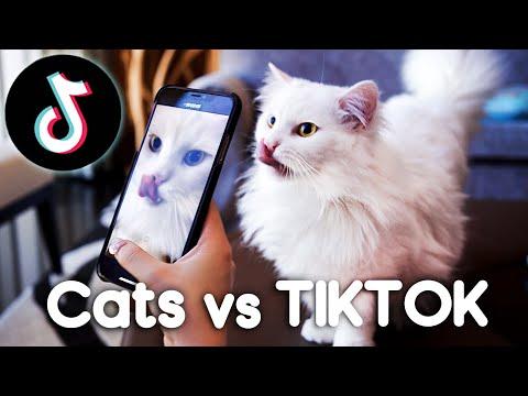 Cats Vs TIKTOK!