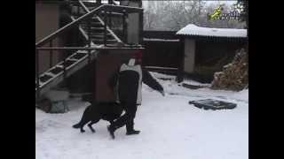 Индивидуальные и групповые занятия по дрессировке собак