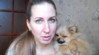 Как выглядит клеймо у собаки ? И для чего собаке нужно клеймо ?