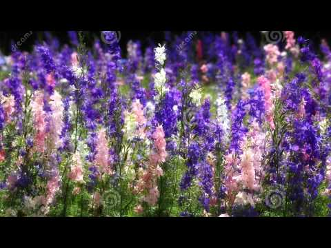 Where Wildflowers Grow