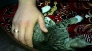 как кот понимает человека