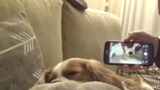 How to stop anyone frim snoring even a dog