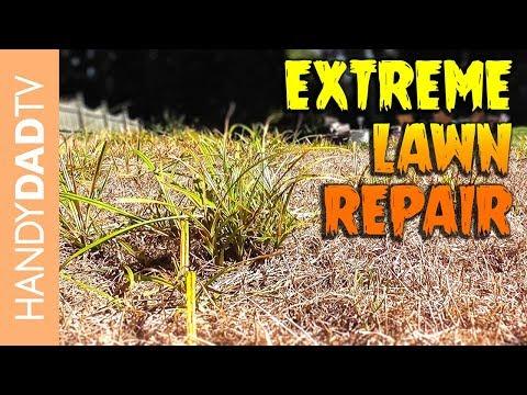 Extreme Lawn Repair