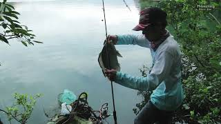 Catch Big Tilapia While Sitting On a Banyan Tree Over a Lake