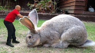 пушистые крольчата. маленький кролик.
