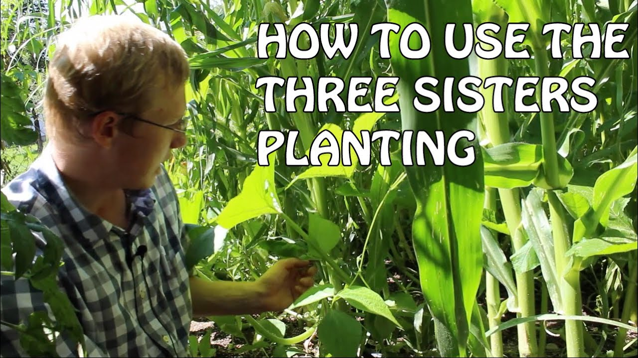 How to use the three sister planting method youtube how to use the three sister planting method pooptronica Images