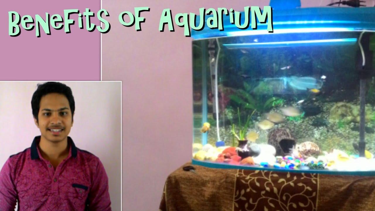 Benefits Of Aquarium Health Vastu Shastra And Feng Shui Hindi