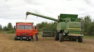 Уборка пшеницы в агрохолдинге «Дмитровские овощи»