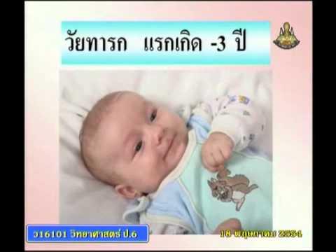 003+scip6+dltv54p+540518+C+การเจริญเติบโตของมนุษย์ การเปลี่ยนแปลงร่างกายเมื่ออยู่ในครรภ์