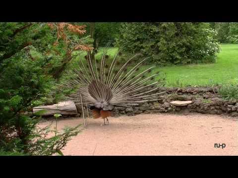 Wörlitzer Park - tierische Idylle - 2D-Fassung