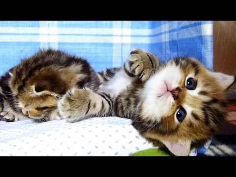 We are Peter and Pavel : funny brothers - Cute Kittens