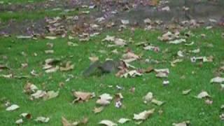 Squirrel Cheeky Movie
