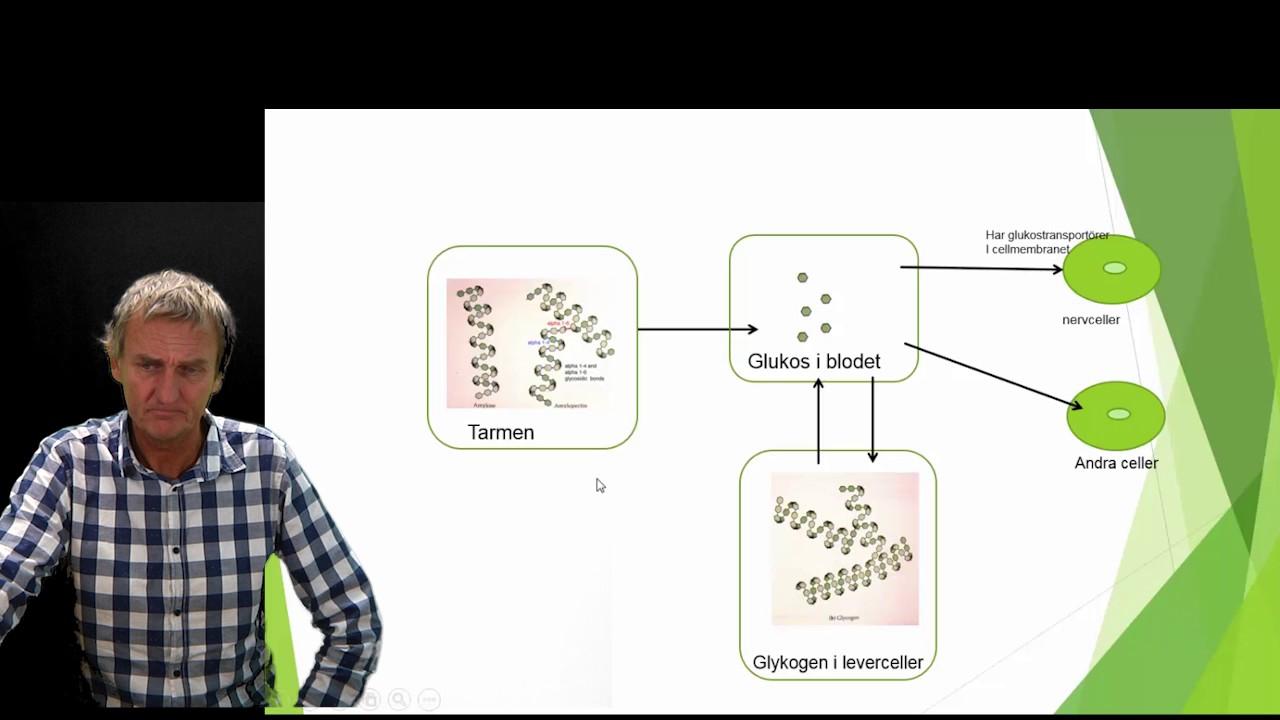 Reglering av blodets glukoshalt