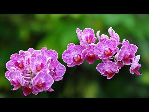 Какой горшок выбрать для орхидей?