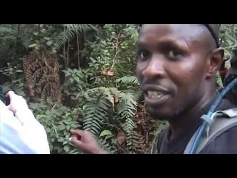how to climb kilimanjaro machame route best video