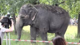 Слоны в Челябинске в саду победы