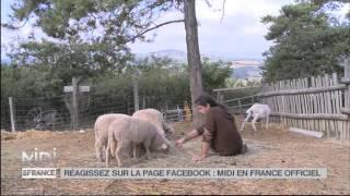 ANIMAUX : Chèvres et moutons du monde entier se retrouvent dans la Drôme