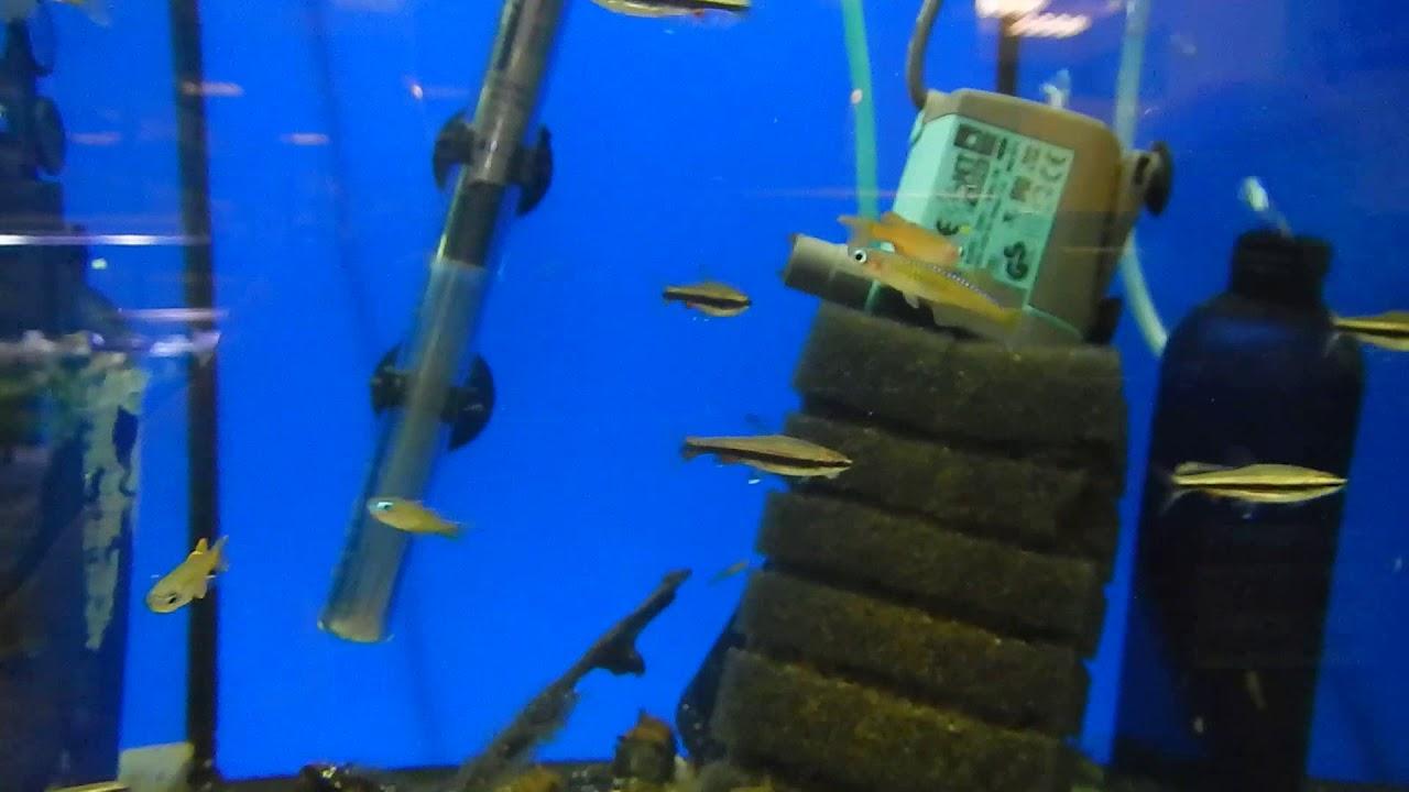 Выставка продажа аквариумных креветок, раков, крабов в Харькове .