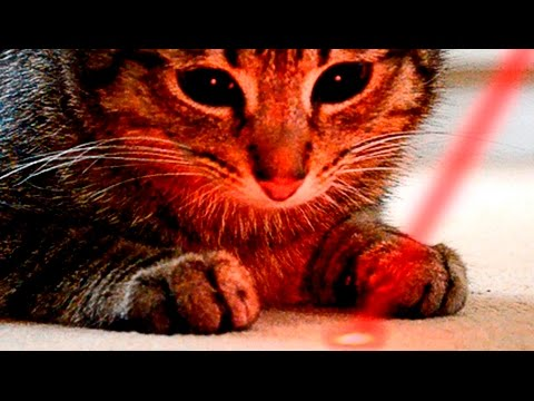 Cats vs laser pointers   Funny cats compilation    funnycat12