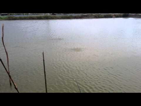 Cá rô ... đâu cần mồi câu !!!