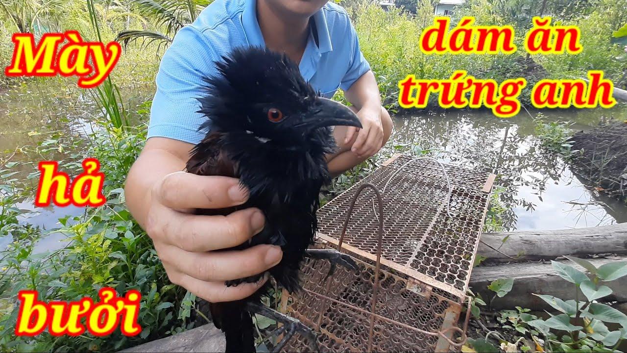 Cách bẫy chim bìm bịp đơn giản hiệu quả không cần mồi chỉ với vỏ trứng gà vịt/how to trap birds