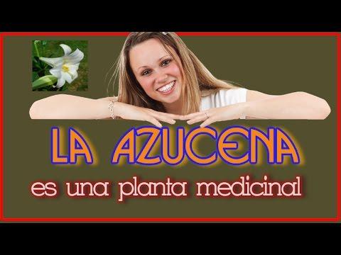 La Azucena Es Una Planta Medicinal - Azucena para Suavizar y Cicatrizar la Piel