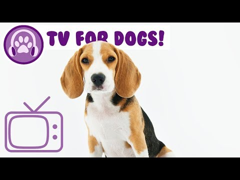 Chill My Dog TV! Fun Beach and Nature TV for Dogs to Watch! NEW!