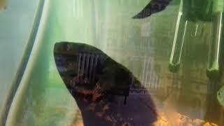Что это за рыба? Специалисты молчат