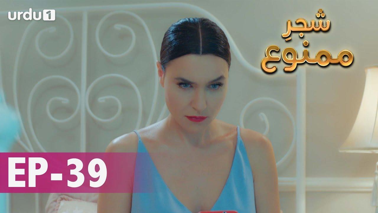 Shajar-e-Mamnu | Episode 39 | Turkish Drama  | Forbidden Fruit | Urdu Dubbing | 02 February 2021