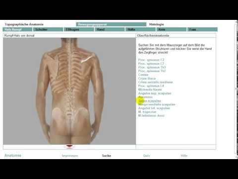 Anatomie:Oberflächenanatomie 10/11 - YouTube