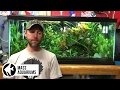 How to cycle your aquarium nitrogen cycle explained