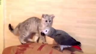 Смешные видео про животных  Улетные животные смешно до слез  Смешные животные до слез