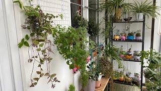 키우기쉬운 달개비 벽걸이만들기와 오늘의 베란다정원