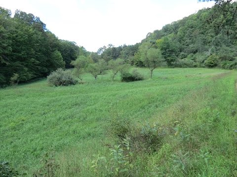 123 Batton Run Road, Spencer, WV | 88 Acres +/-