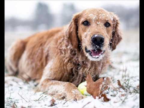 Охотничьи породы собак с названием, описанием и фото