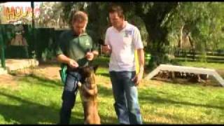 Puppy training-www.sidneyaarons.com.au