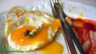 Heterocyklické aminy ve vejcích, sýru a kreatinových doplňcích stravy?