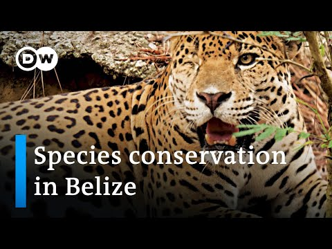 Belize: Animal protection during the coronavirus pandemic | Global Ideas
