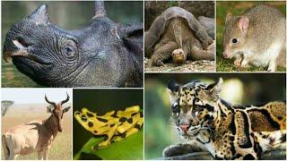 7 Animales Que Desaparecieron Por Culpa Del Hombre