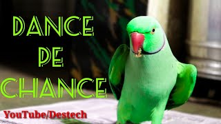 Parrot Singing And Dancing Then Eating And Enjoying Nature