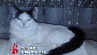 Жительница Челябинска боится, что ее пропавшая кошка может стать жертвой живодера